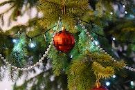 holiday, lights, tree