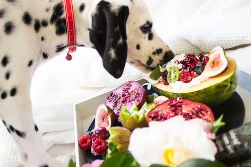 Perro Dálmata Blanco Y Negro Comiendo Frutas