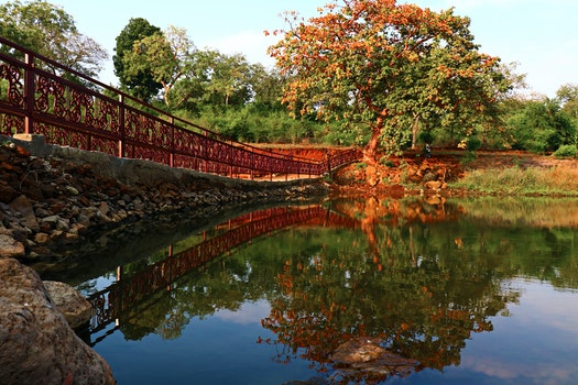 Reflection of a Tree on Body of Water Beside a Bridge Under Calm Blue Sky