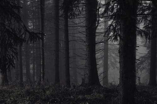 Fotobanka sbezplatnými fotkami na tému bezlisté stromy, kmene stromov, les