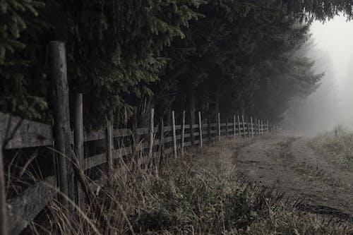 Fotobanka sbezplatnými fotkami na tému cesta, čierny abiely, odtiene sivej