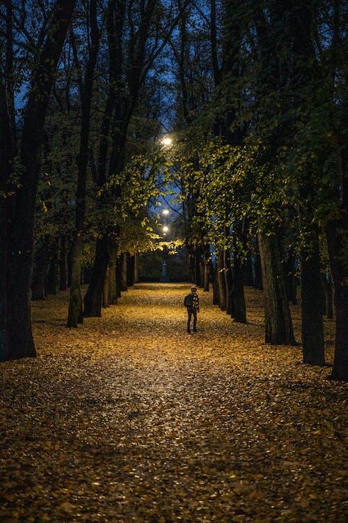 Kostenloses Stock Foto zu allein, bäume, person