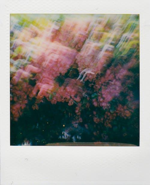 Fotos de stock gratuitas de abstracto, al aire libre, árbol