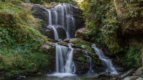 Free stock photo of darjeeling, green, nature