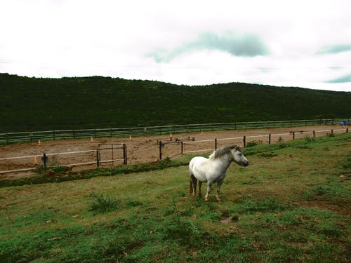 White Horse on Green Grass Field With Fence