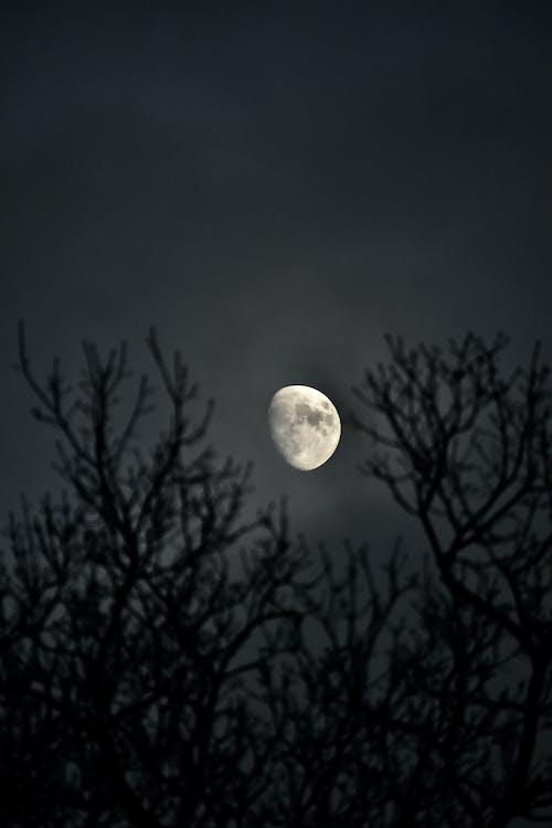 Fotos de stock gratuitas de arboles, cielo, Luna