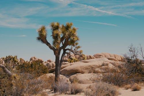 Free stock photo of beautiful, cactus, california