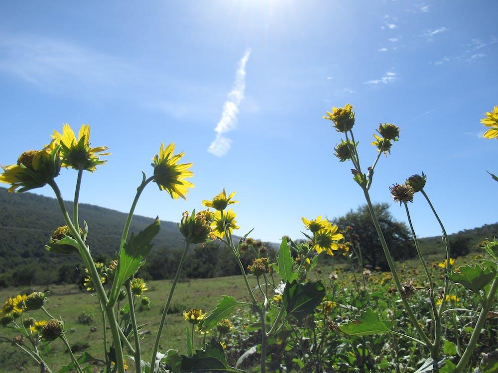 ánh sáng mặt trời, ban ngày, bầu trời