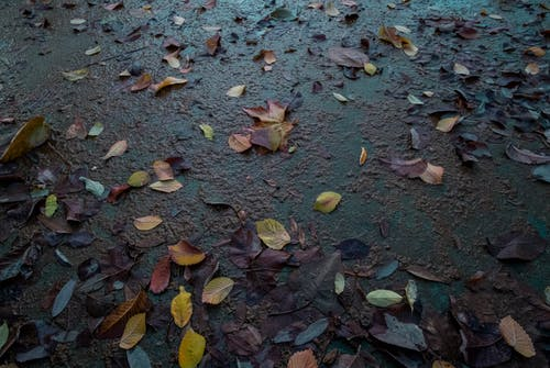 Free stock photo of autumn mood forest, color, fall leaves