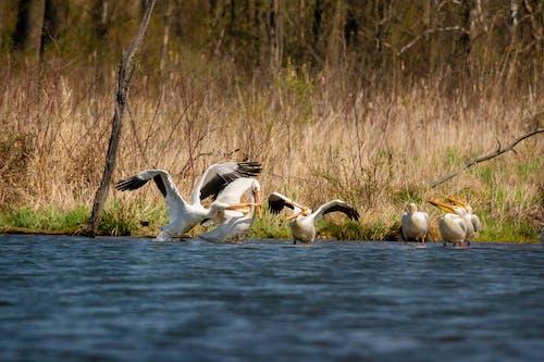 Fotos de stock gratuitas de agua, animales en la naturaleza, aves