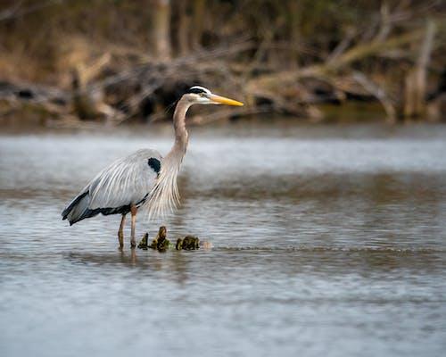 Fotos de stock gratuitas de agua, animal, animales en la naturaleza