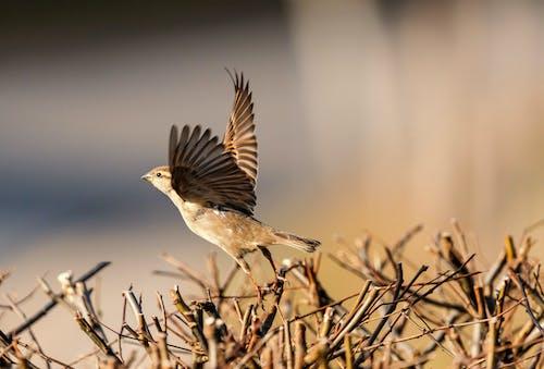 Free stock photo of bird, flying, nature