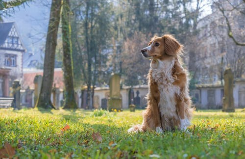 A Dog Sitting on a Grass