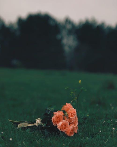 Orange Flower on Green Grass Field