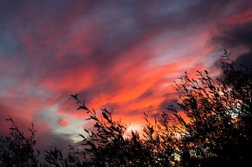Fotos de stock gratuitas de amanecer, arboles, brillante, cielo