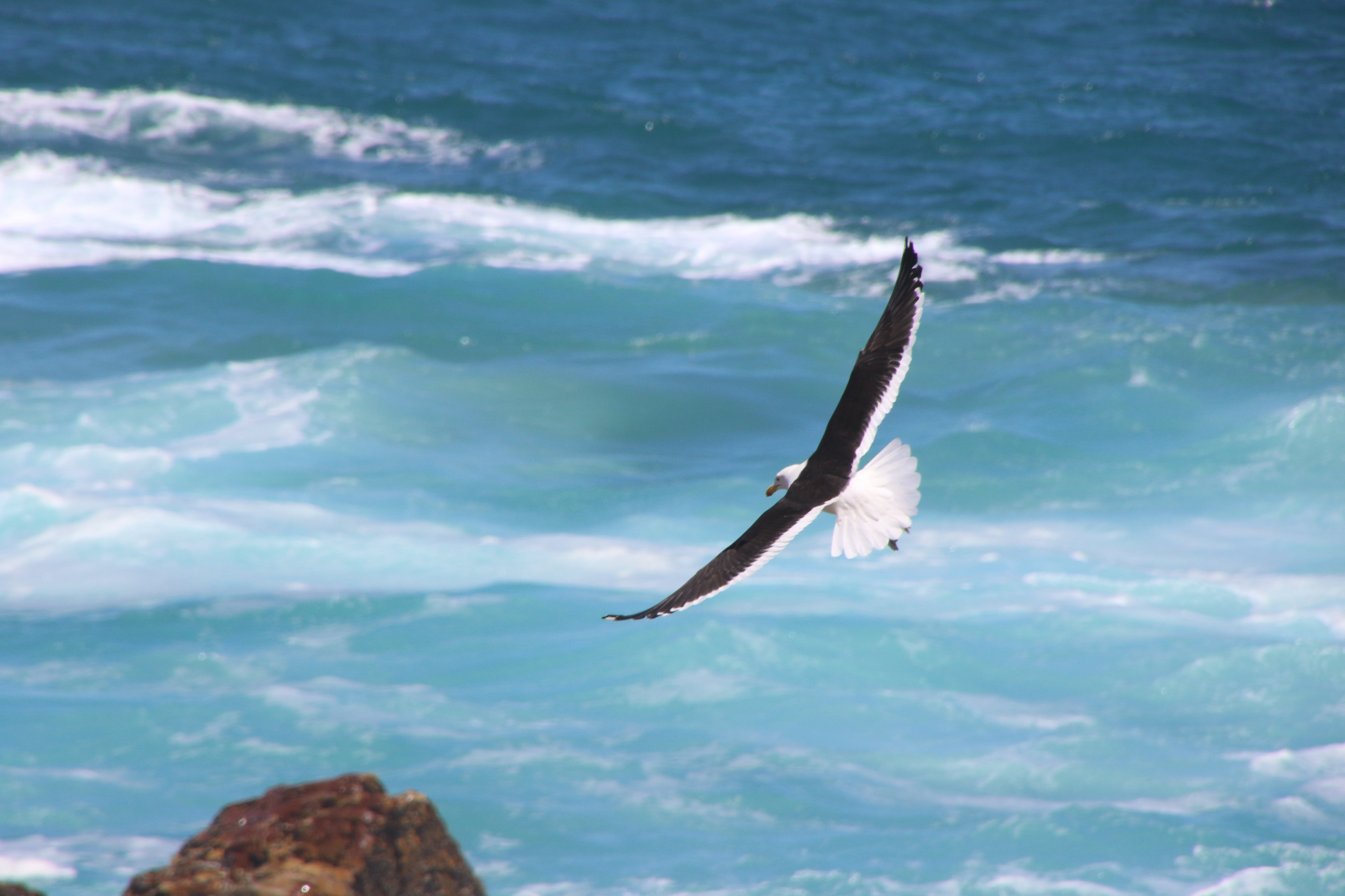 Time Lapse Photo of Soaring Bird Above the Sea