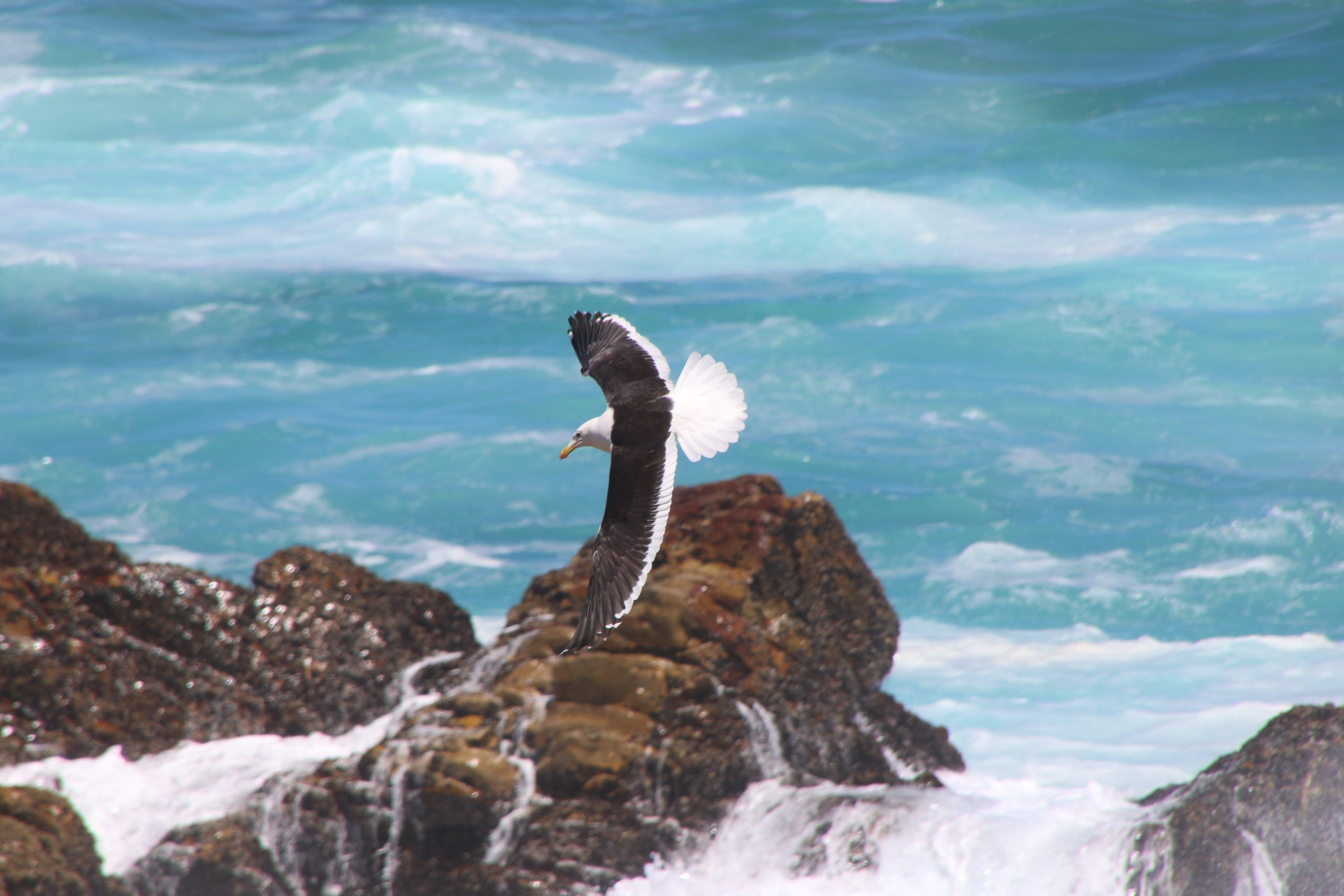 Photos gratuites de ailes, animal, bord de mer, cailloux