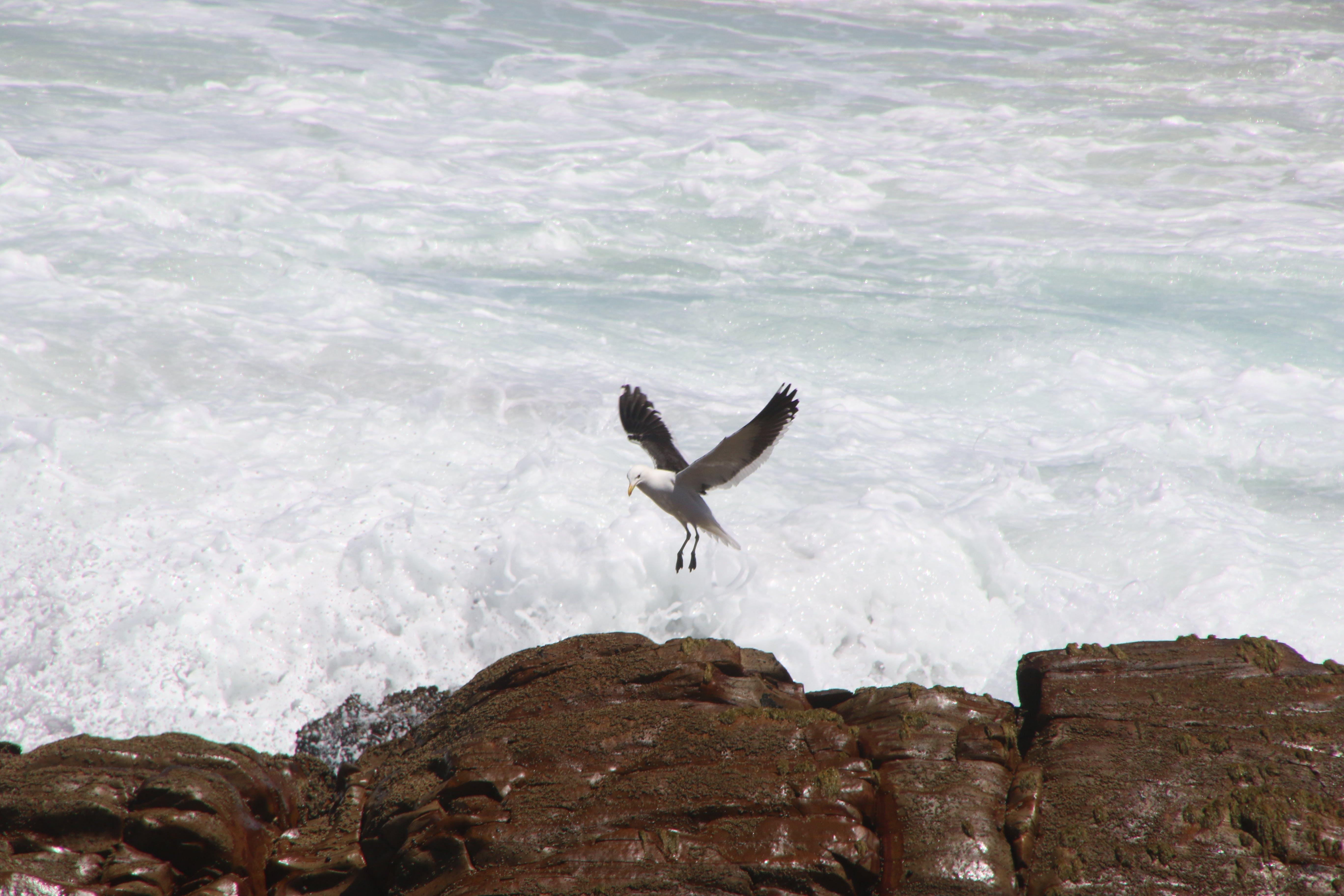 White Albatros Flying over Body of Water