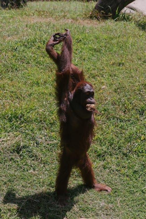 Foto profissional grátis de animais selvagens, animal, bali