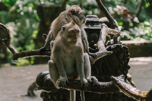 Ingyenes stockfotó ág, állatok, emlősök témában