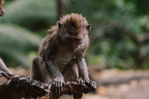 Δωρεάν στοκ φωτογραφιών με άγρια φύση, ζώο, θηλαστικό