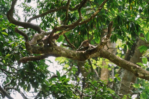 Ảnh lưu trữ miễn phí về cây, chi nhánh, công viên