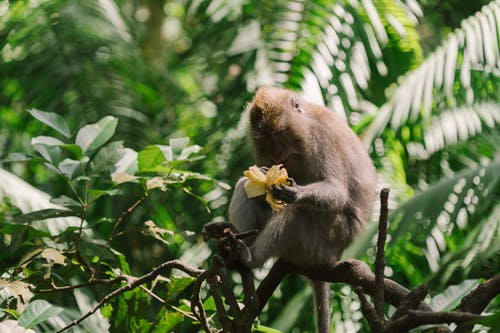 A Monkey on a Tree Branch Holding a Food