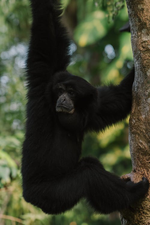Black Monkey on Brown Tree Branch