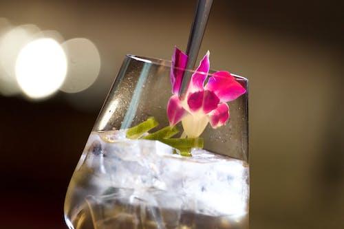 Foto profissional grátis de bebendo, bebida de gin, comida saudável, competição de coquetel