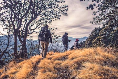 Kostenloses Stock Foto zu abenteuer, bäume, berge, bewölkter himmel