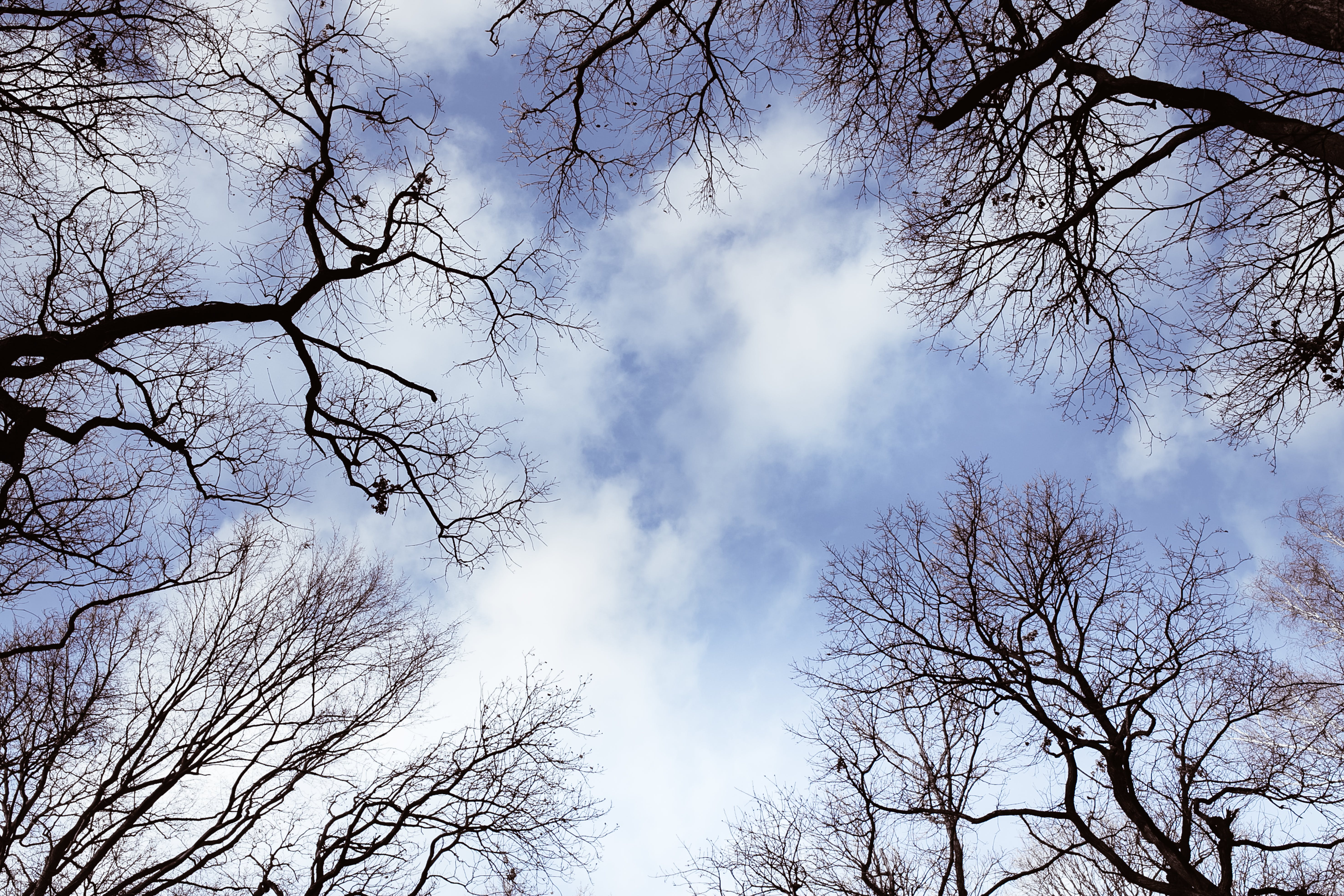 Free stock photo of sky, blue, forest, winter