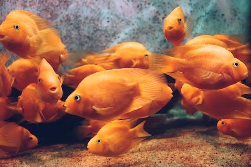 Foto profissional grátis de água, animal, animal de estimação, embaixo da água