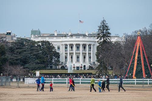 アメリカ合衆国, クリスマスツリー, グループの無料の写真素材
