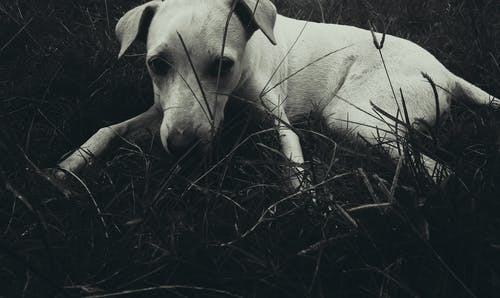 Free stock photo of animal, animal photography, dark