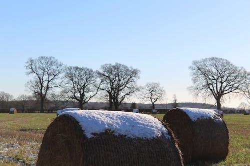 Gratis stockfoto met baal, balen hooi, boerenbedrijf, dorp