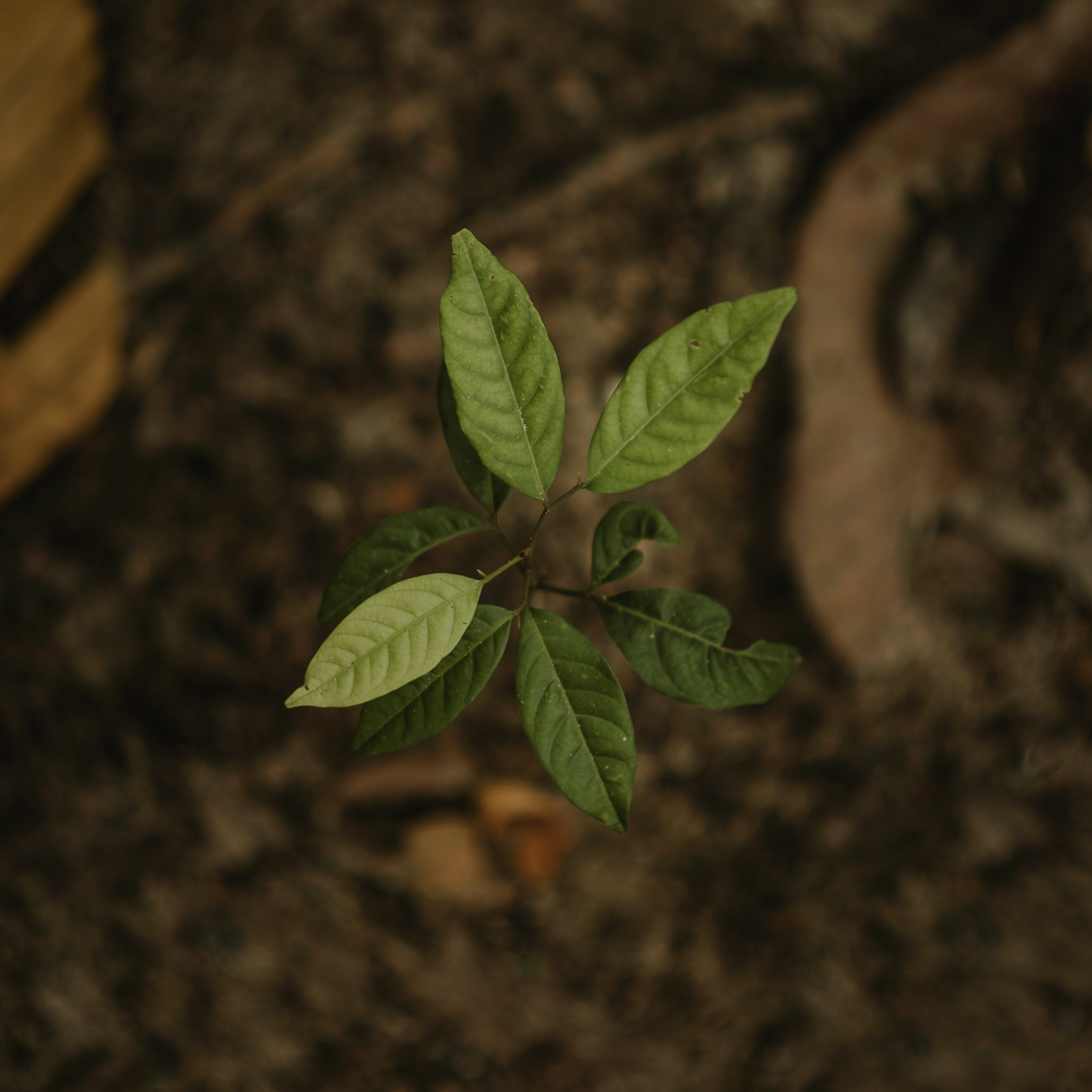 Gratis lagerfoto af close-up, grøn, hakket, lille