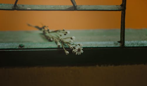 Foto d'estoc gratuïta de brots, desenfocament, finestra, flor
