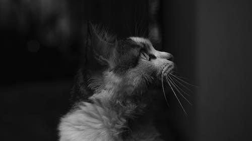 Profile Portrait of Cat in Black and White