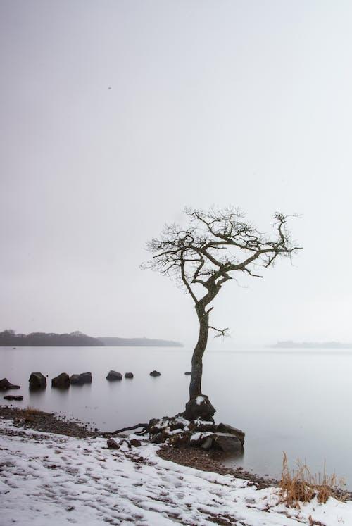 Free stock photo of loch, loch lomond, rocks