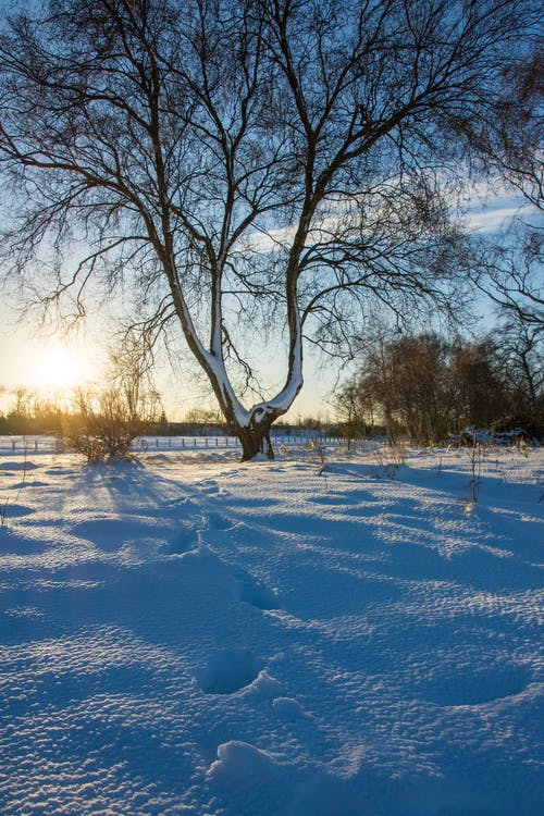 Free stock photo of nature, shadow, snow
