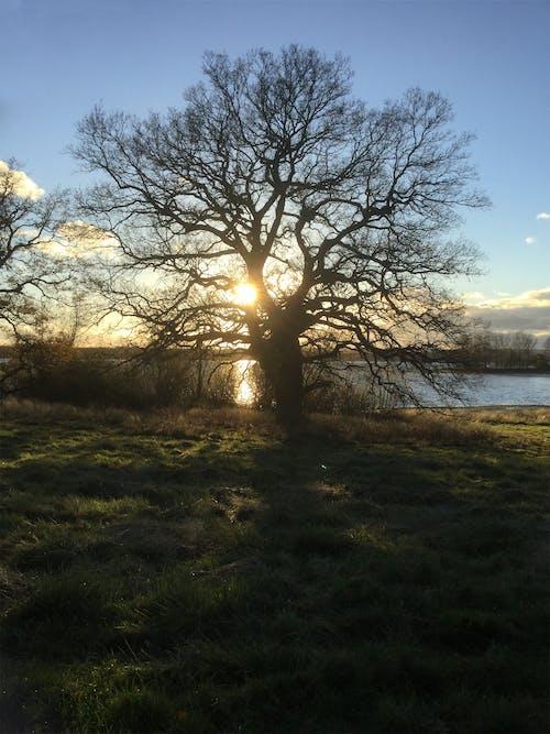 Free stock photo of winter sun