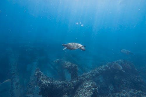 Sea Turtle Swimming on Under Deep Blue Water