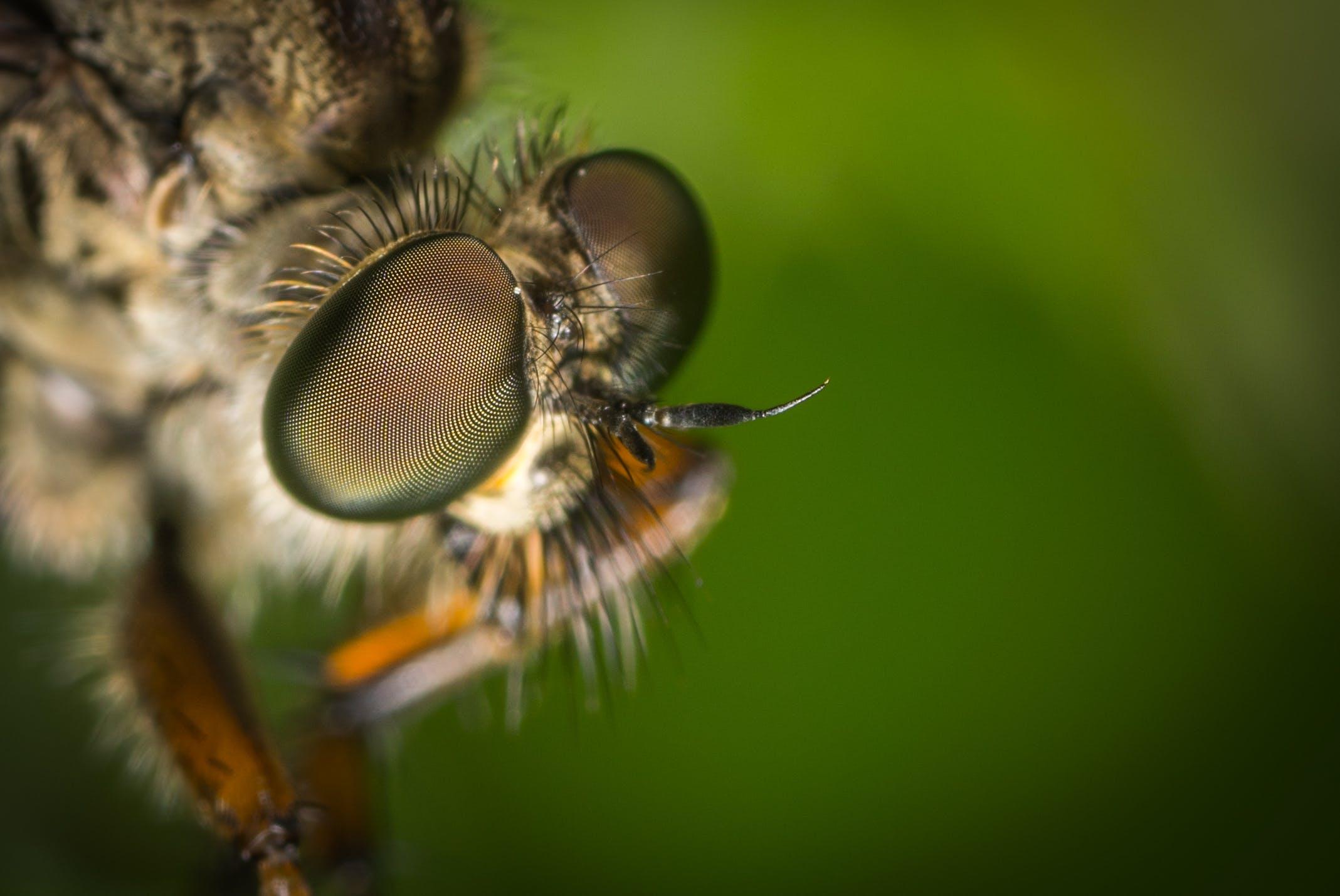 Macro Photography Of Fly