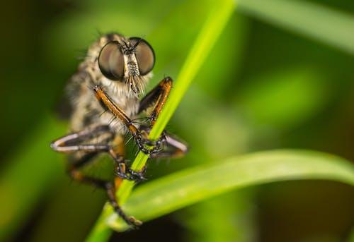 Foto profissional grátis de animais selvagens, fotografia de pequenos seres, grama, inseto