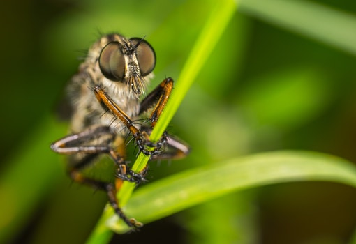 Macro Photography of Robber Fly Perched On Green Leaf