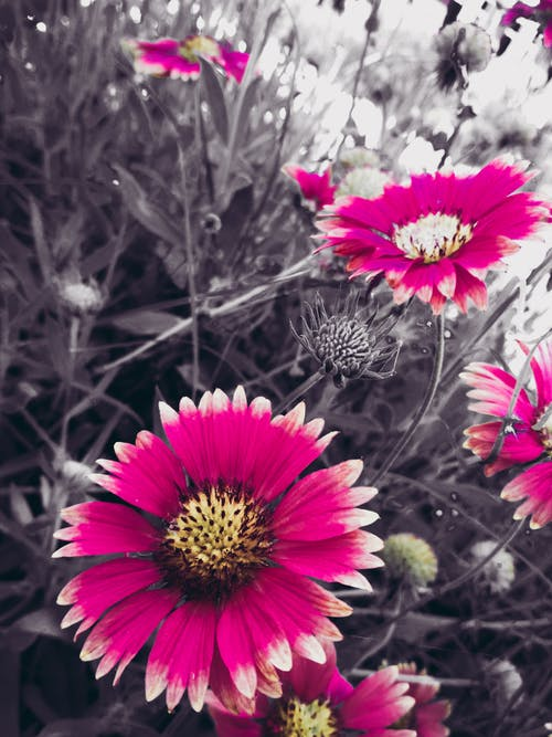 Free stock photo of bw photography, city park, dry flowers