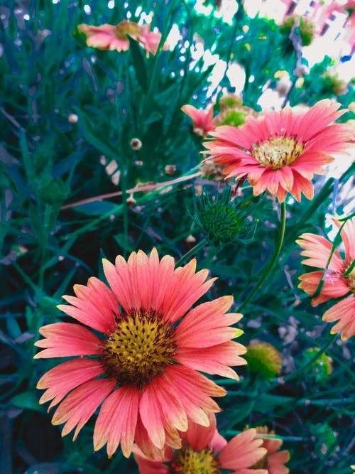 Free stock photo of beautiful flowers, flowers, nature photography