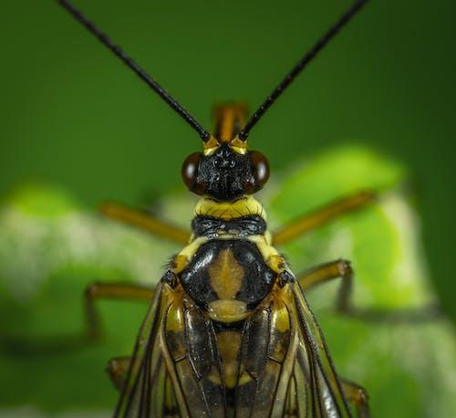 Foto profissional grátis de animais selvagens, antena, close, inseto