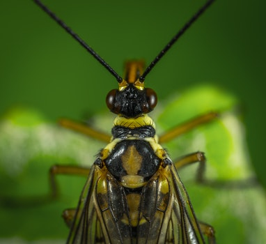 Photography Of Fly