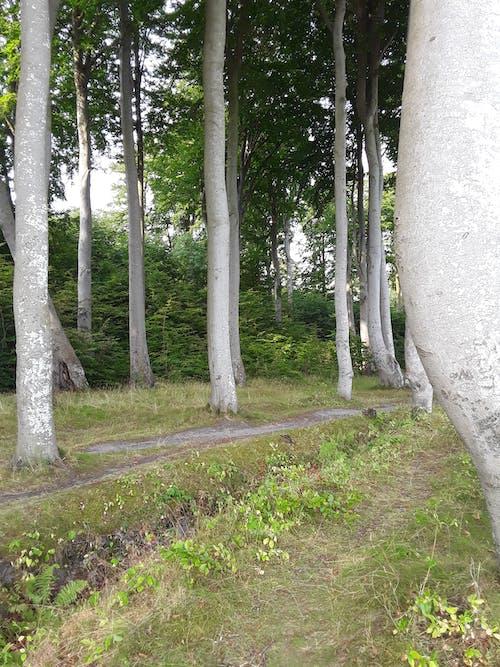 freiehintergründe, grünebäume, grüneblätter 的 免费素材图片